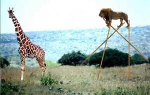 thumb-lion_echasse-girafe